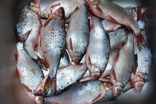 Солим и вялим мелкую рыбу