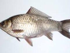 Рыбалка на карася, Как, когда, на что ловить карася