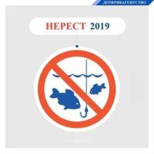 С 1 апреля в Украине вводится запрет на вылов рыбы и раков. Штраф — до 3400 грн или ограничение свободы на срок до трех лет