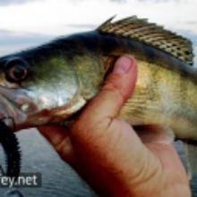 Риболовля на судака наприкінці березня