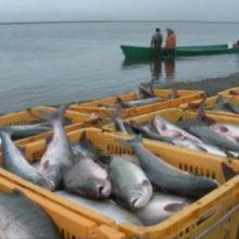В Украине запретили массовый вылов рыбы