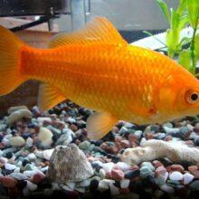 Риби-прилади